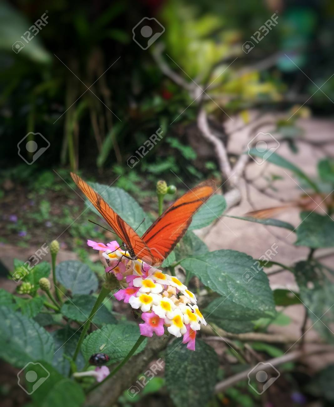 Orange Butterfly With Black Stripes On Wings Perched On Small
