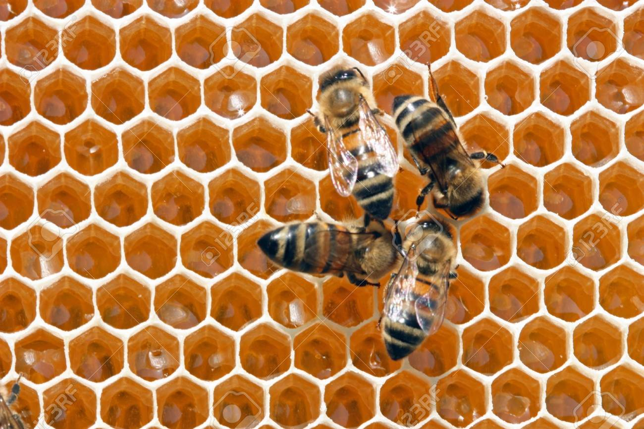 To 12 days young bees constantly work in a beehive. - 5760746