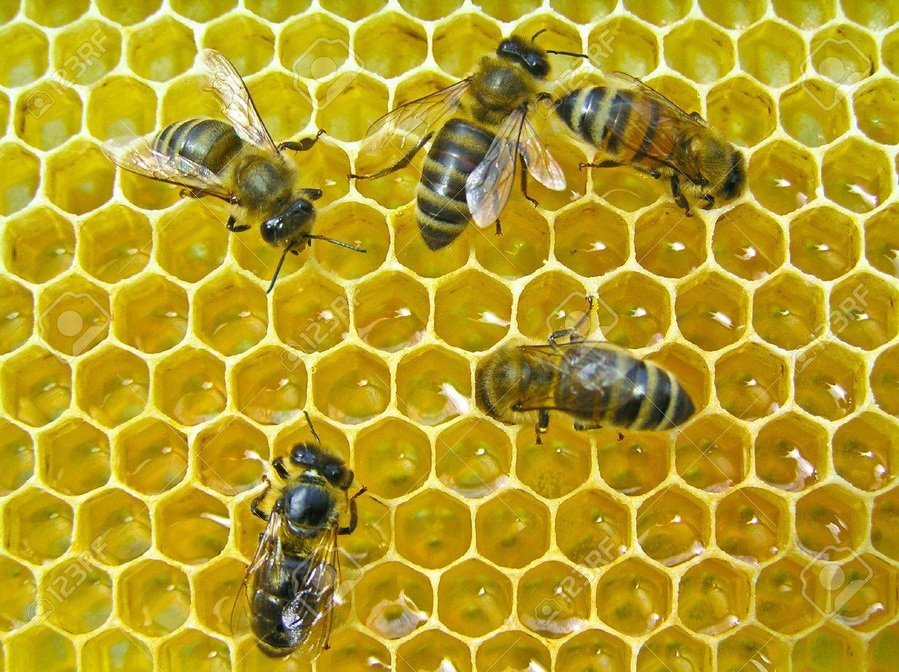 The bees make the nectar into honey. They recruited him into the body and enrich the enzymes. - 7467953