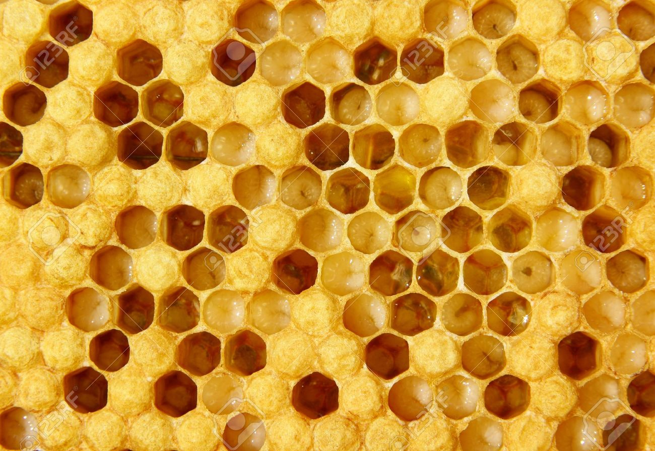 The images show larvae of bees and their future cocoons. Part of hundred empty. - 9833270