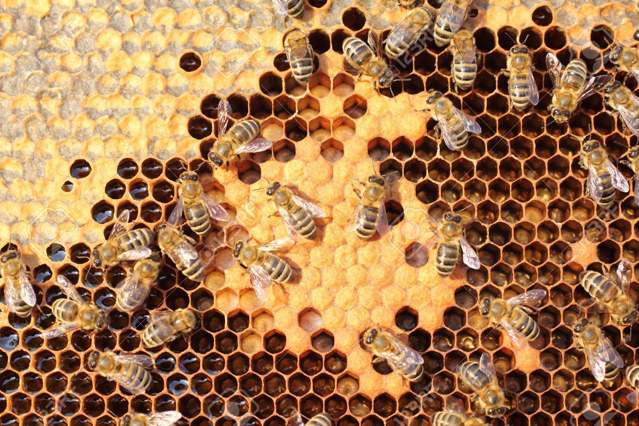Bees take care of the larvae - their new generation - 14776938