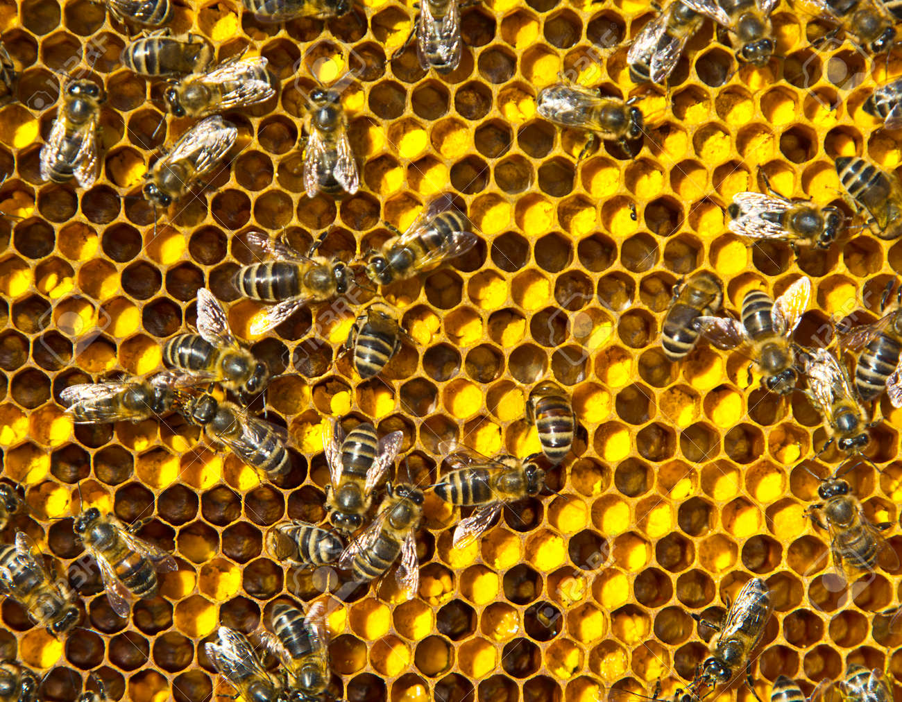 Close up pollen in honeycombs. The color of pollen depends on how it is taken from the flowers. - 167495037