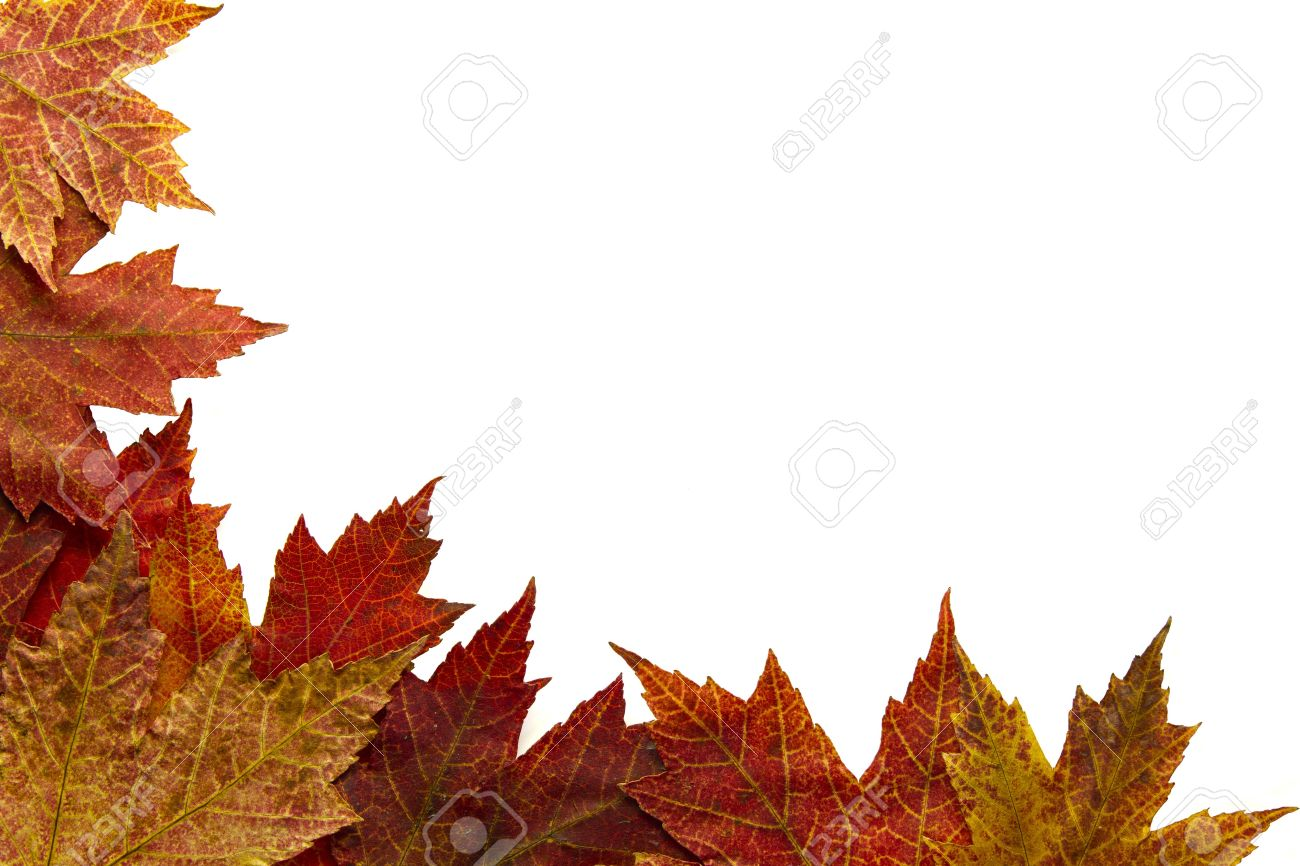 Red Autumn Maple Leaves Border on White Background Stock Photo - 8098515