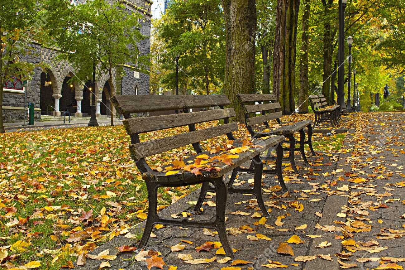 Maple and Elm Tree Fall Leaves on Park Benches 3 Stock Photo - 8098567
