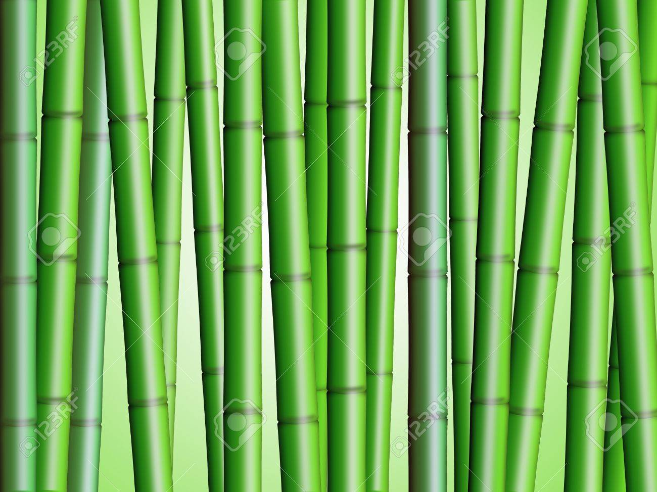 Bamboo Forest Background 2