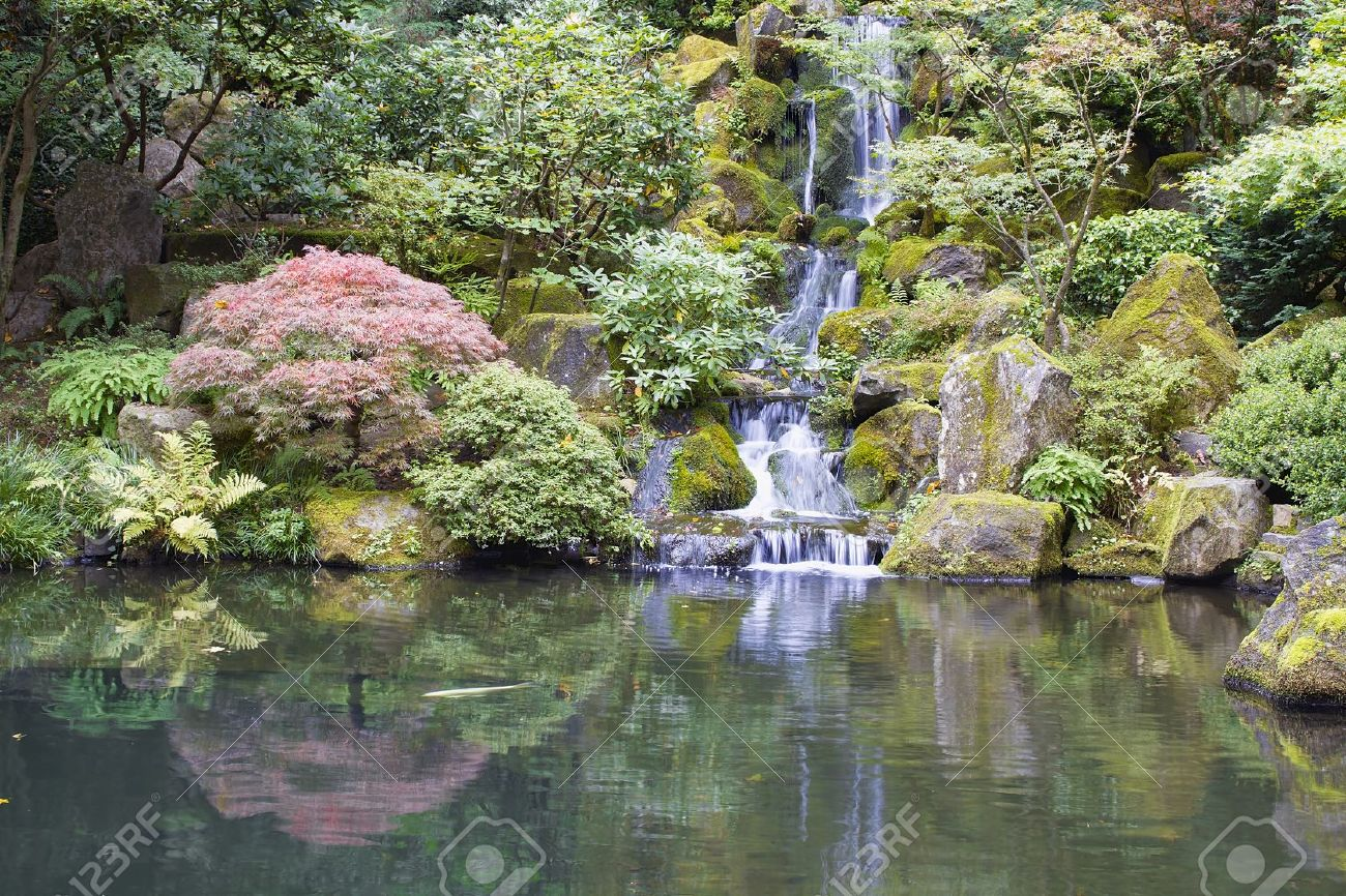 japanese garden koi pond with waterfall maple trees and rocks stock photo 14977752
