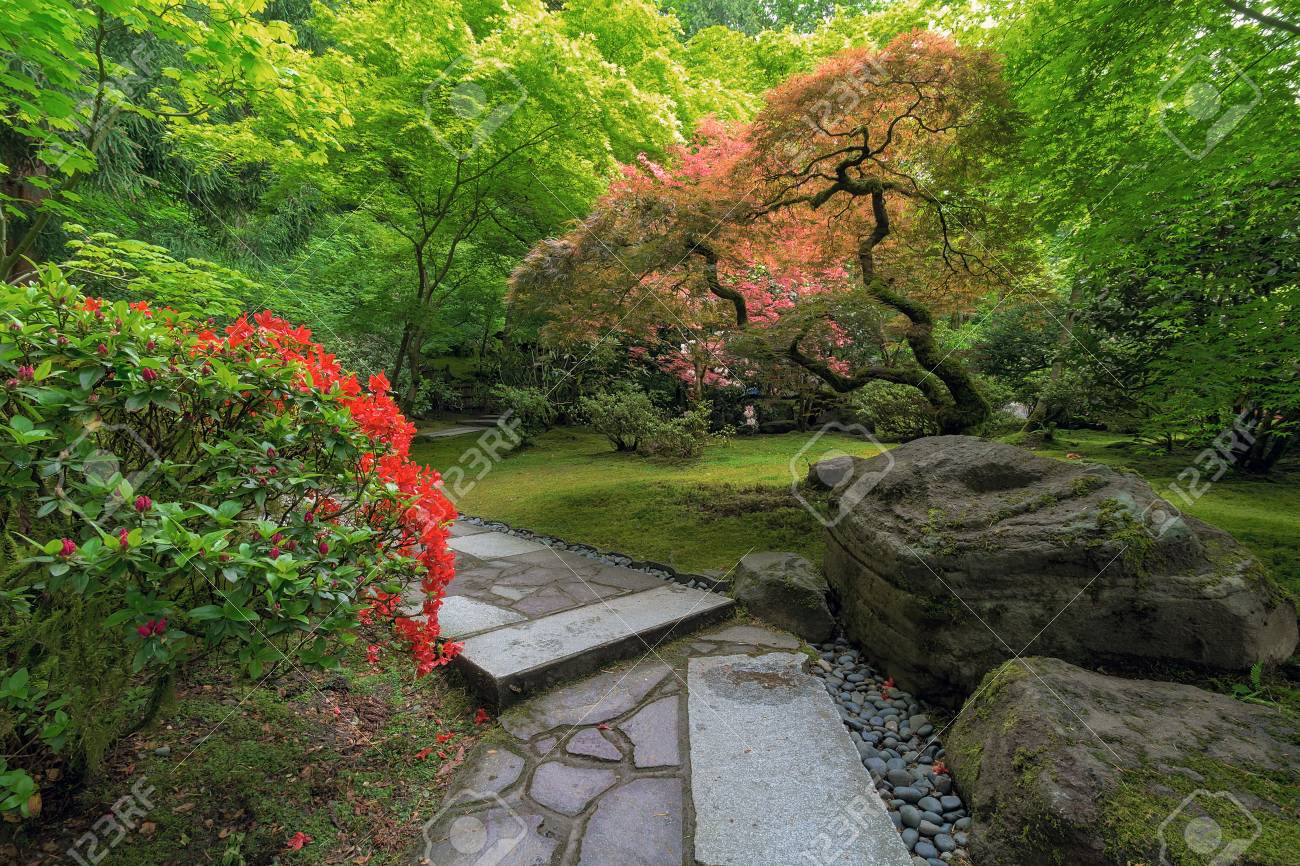 Stone Path With Rocks Maple Trees Plants Shrubs In Japanese Garden