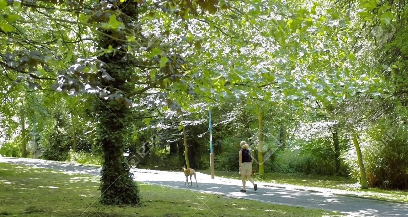 woman walking dogs uphill Stock Photo - 2059411