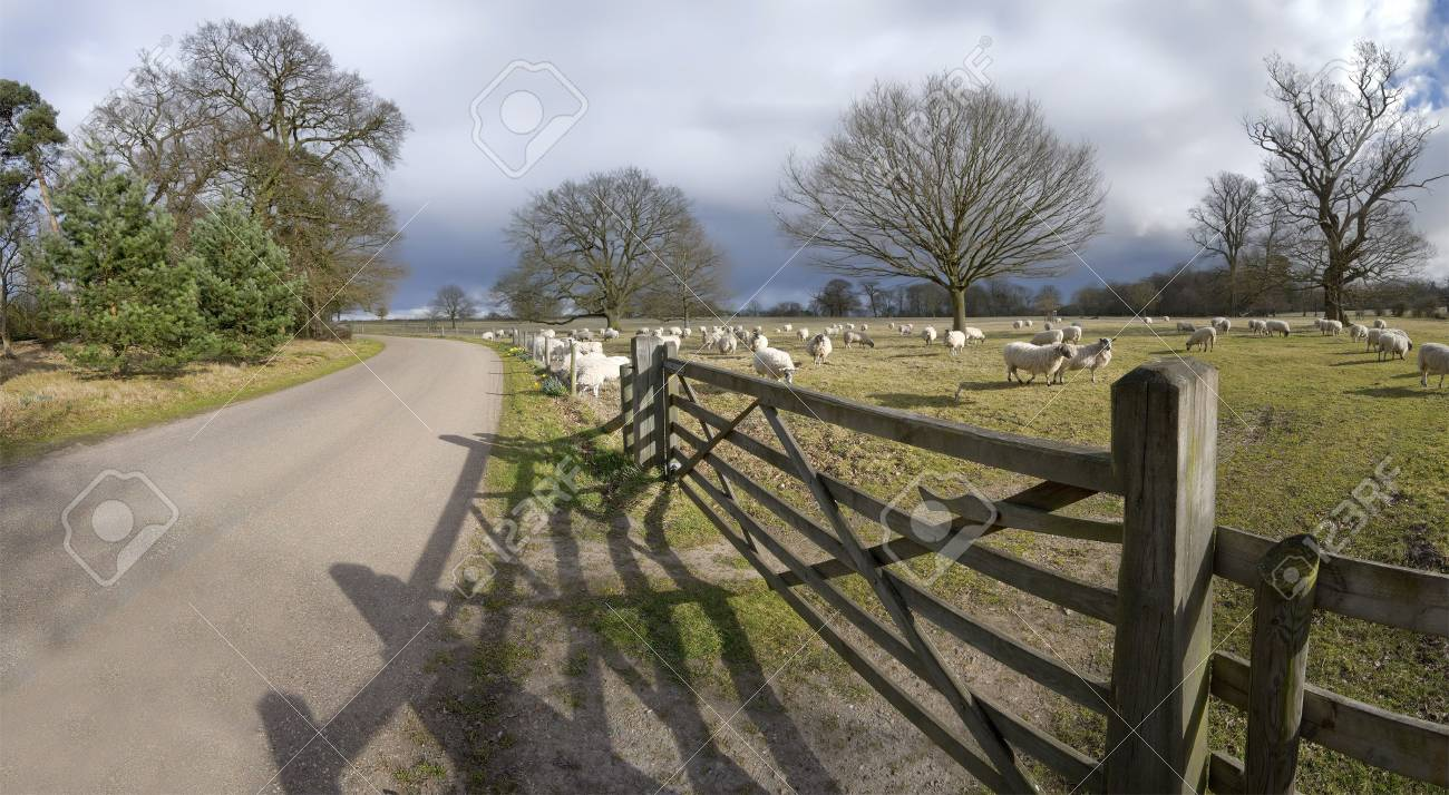 A herd of sheep, animals on farm illustrating farming, agriculture, wool, livestock and animals. Stock Photo - 2672721