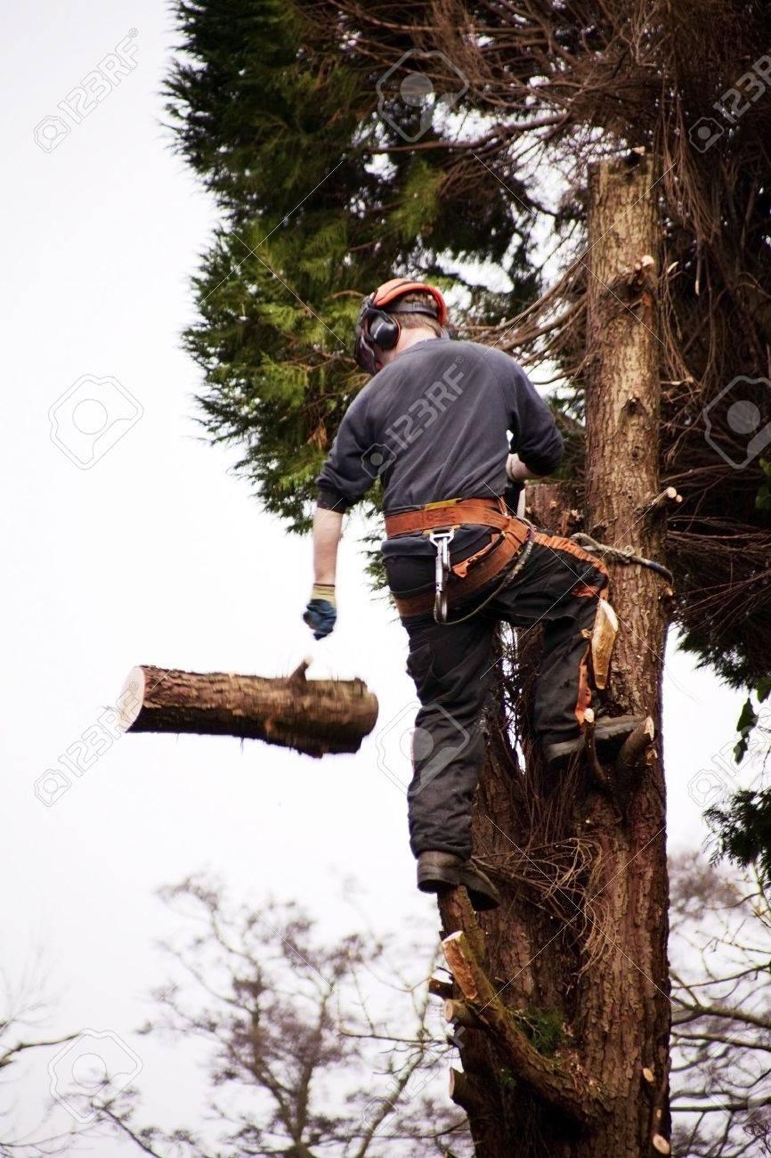 a tree surgeon chopping down a rotten tree Stock Photo - 4577332