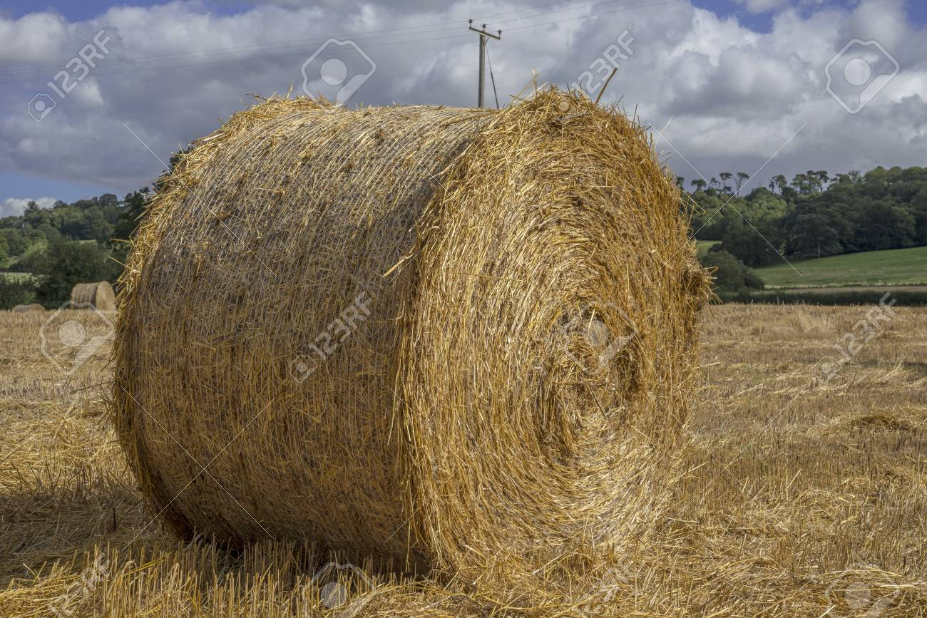hay bales in a field on a farm Stock Photo - 15451700