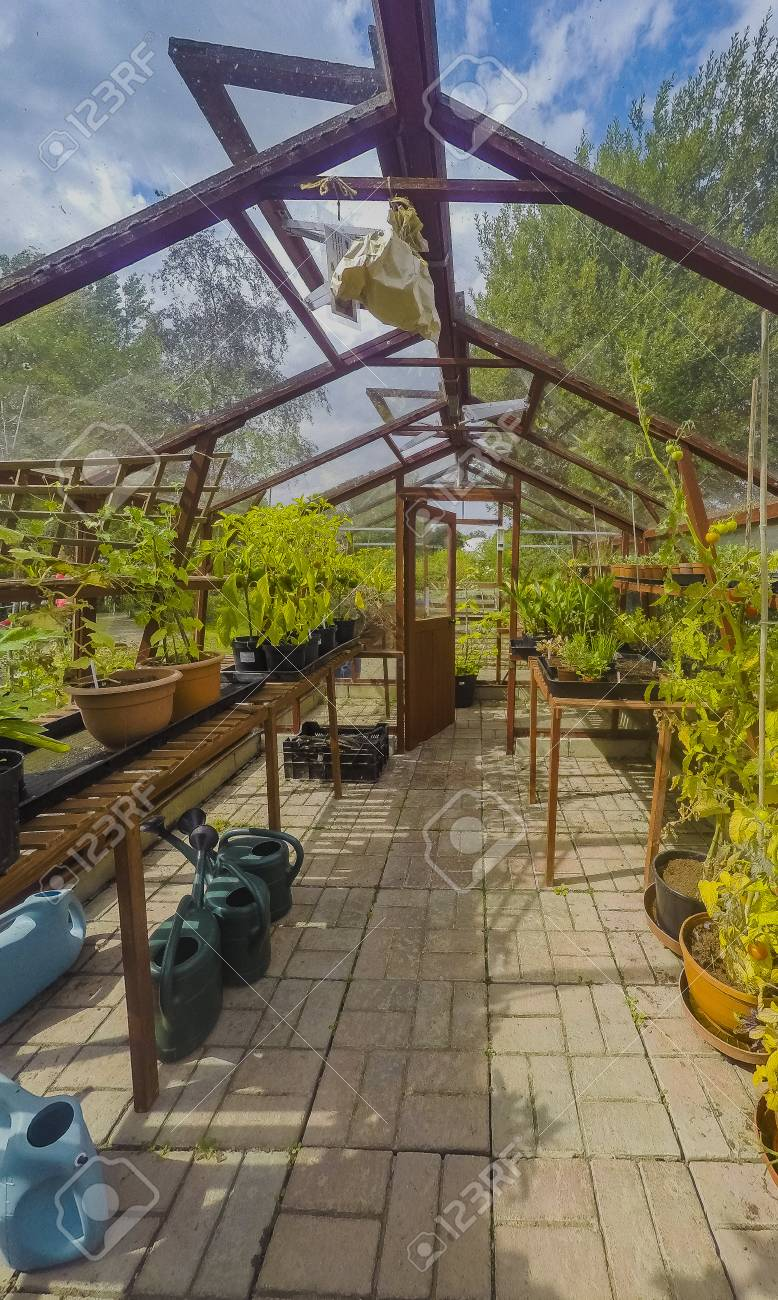 Greenhouse Ryton Organic Gardens Nr. Coventry Midlands England Stock ...