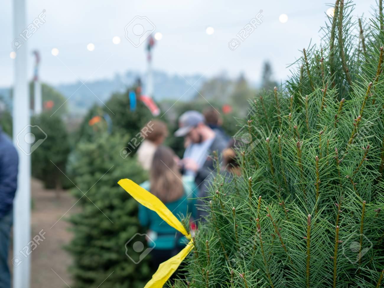 Douglas Fir Christmas Tree.Close Up Of Douglas Fir Christmas Tree At Market With Patrons