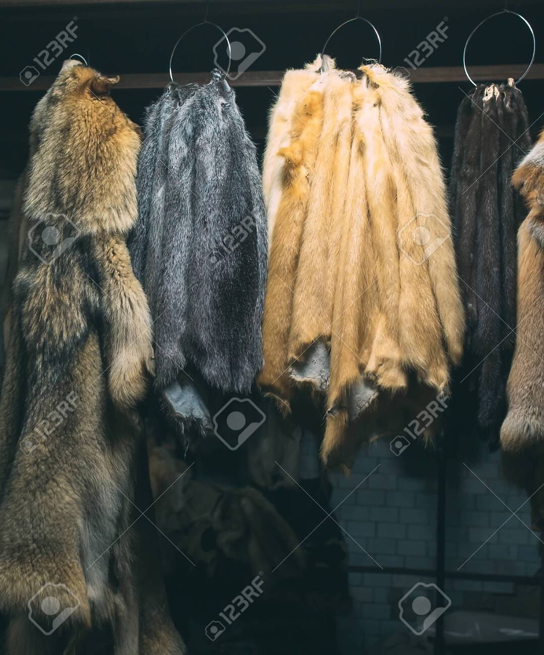 Animal fur. foxes, raccoon, wolf, beaver, mink, nutria hanging after processing. - 128220224