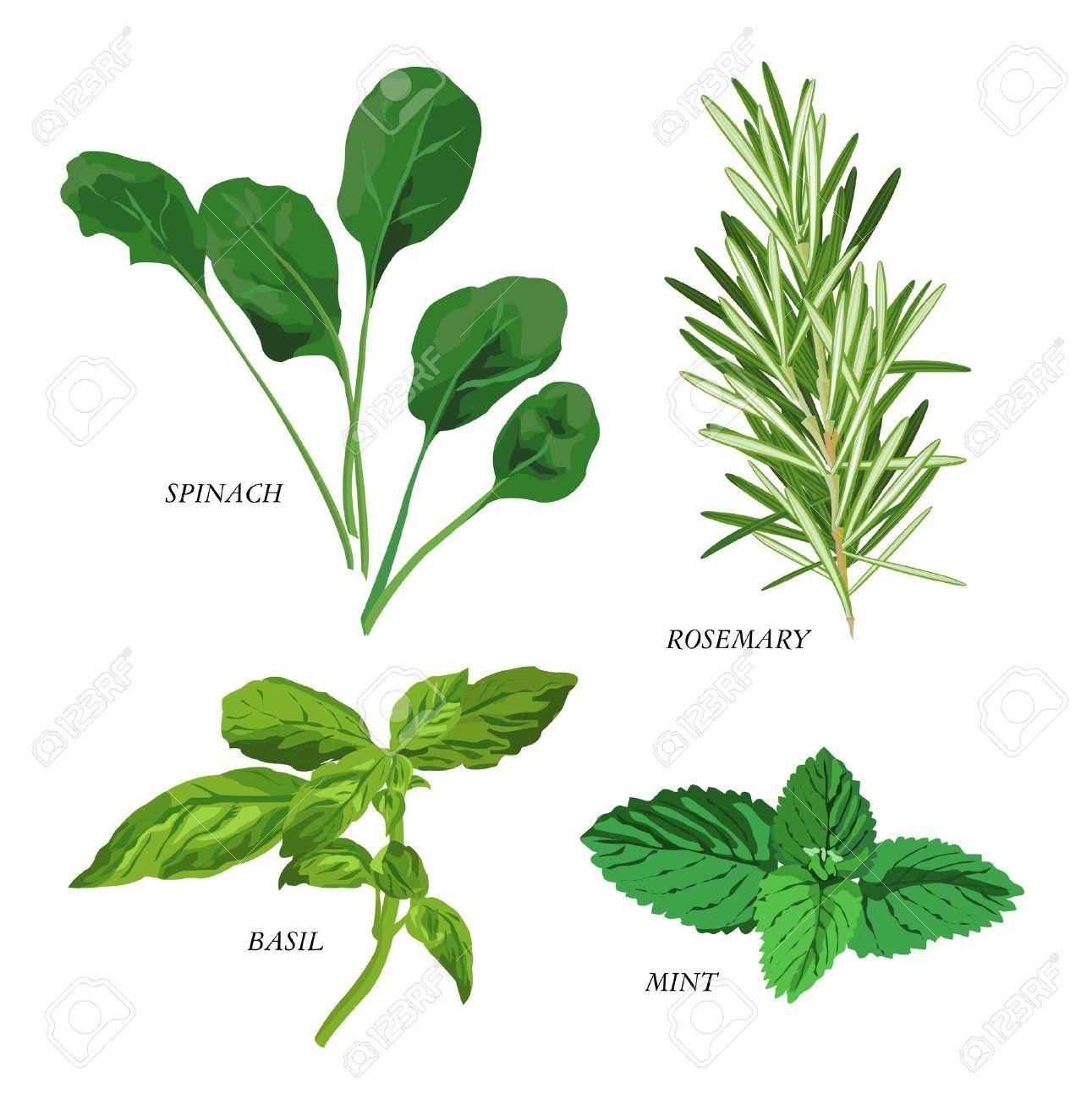 Clip-arts of various herbs Stock Vector - 4730829