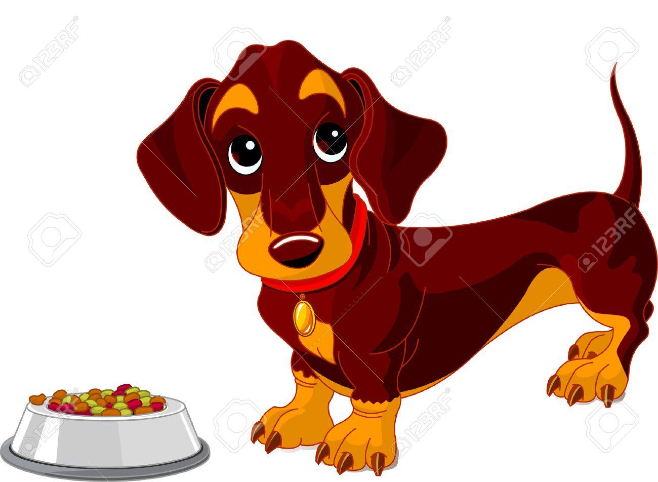 Cute dachshund dog near bowl of dog food Stock Vector - 6779893