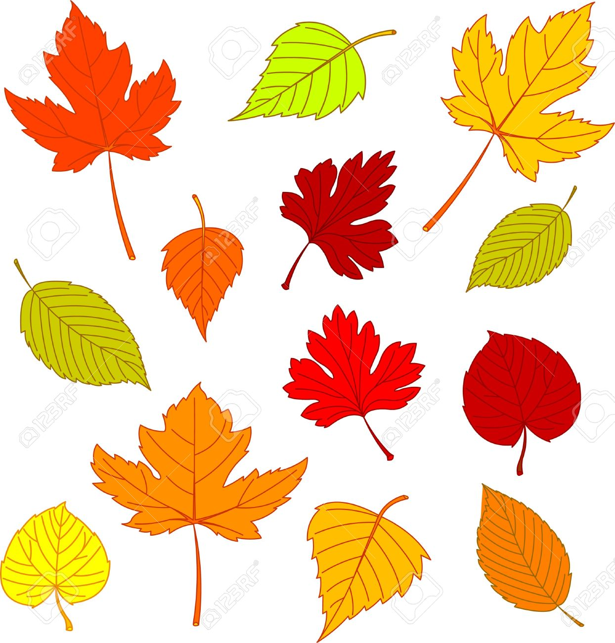Illustration of different autumn leaves isolated on white Stock Vector - 7879527