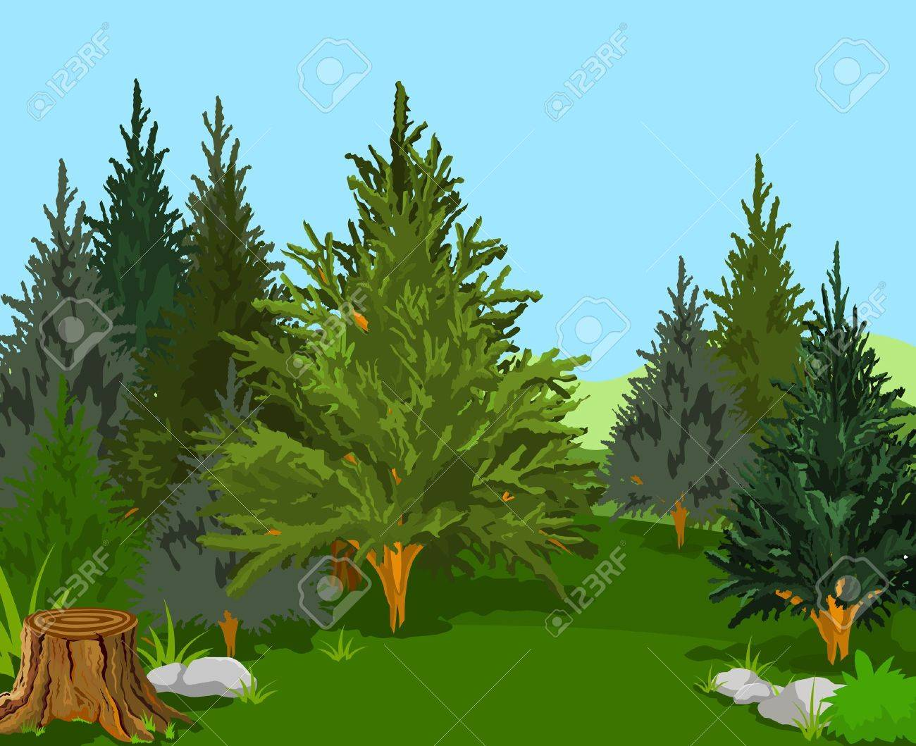 A Green  Forest Landscape with Pine Trees Stock Vector - 13545879