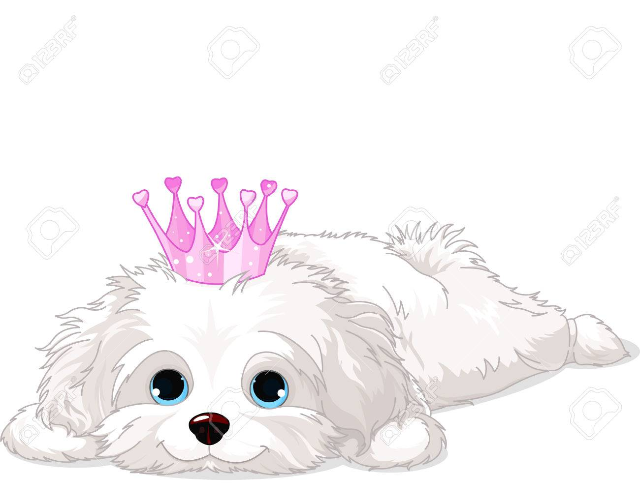A cute white Havanese puppy with crown laying down - 24503355