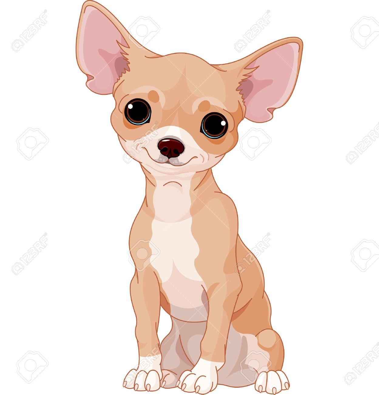 Popular Chihuahua Canine Adorable Dog - 29168236-cute-dog-of-breed-chihuahua  Image_2661  .jpg