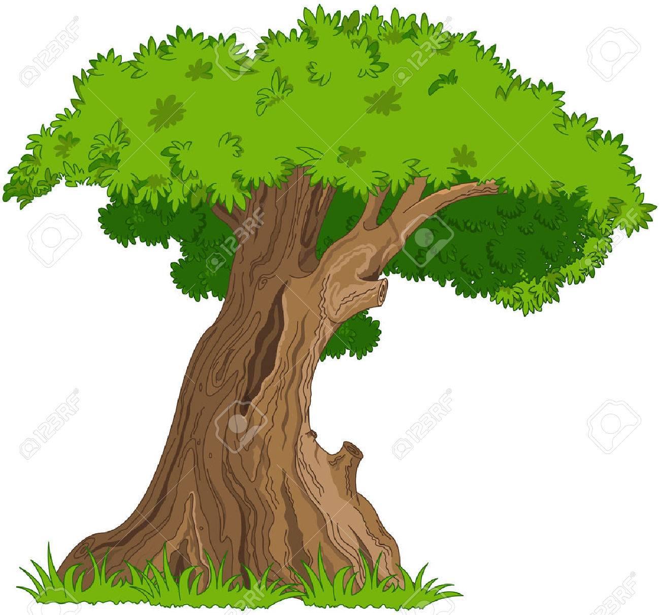 非常に古い樫の木のイラストのイラスト素材ベクタ Image 35588780