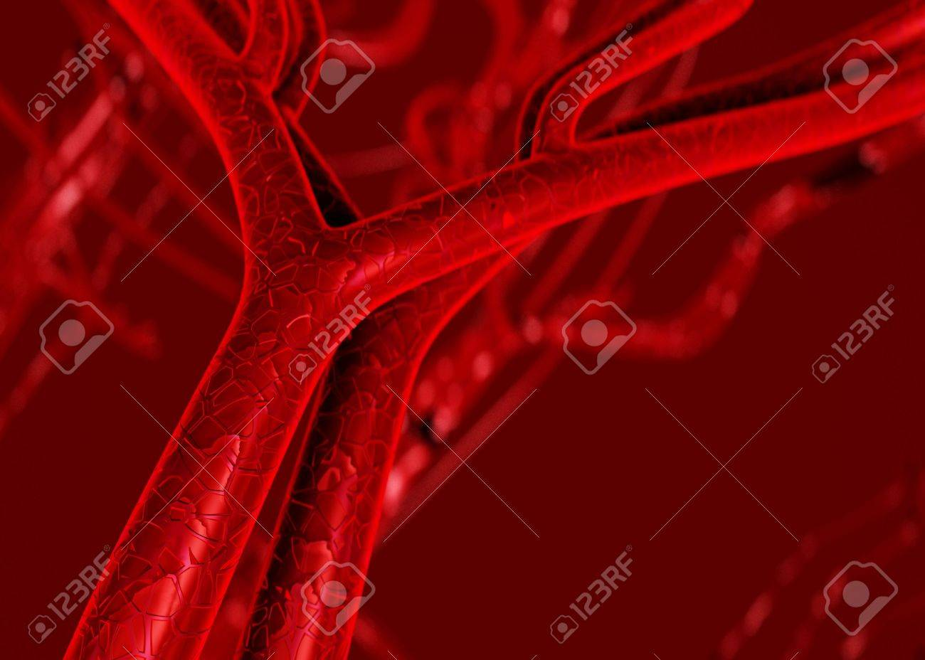 Blood arteries and veins Stock Photo - 823796