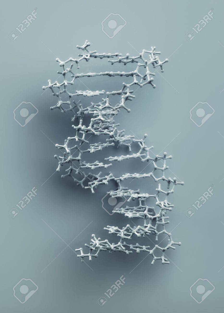 DNA structure molecule 3D rendering. Exact representation of DNA from protein data bank. - 8968146