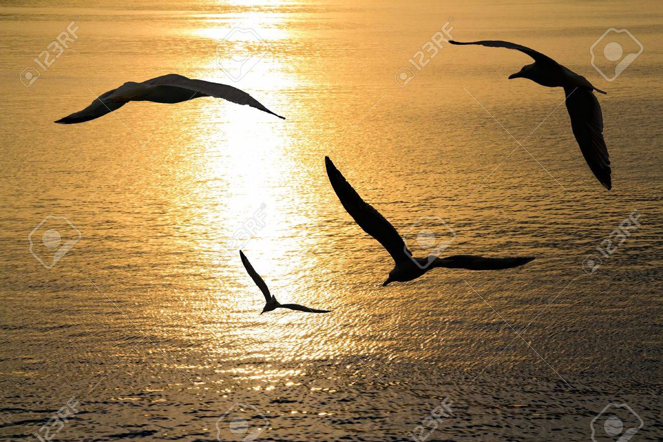 Seagulls flying positions on sunset. - 15586232