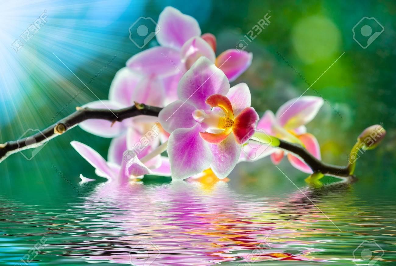 Foto de archivo , sol hermoso ramo de flores de orquídeas brilla