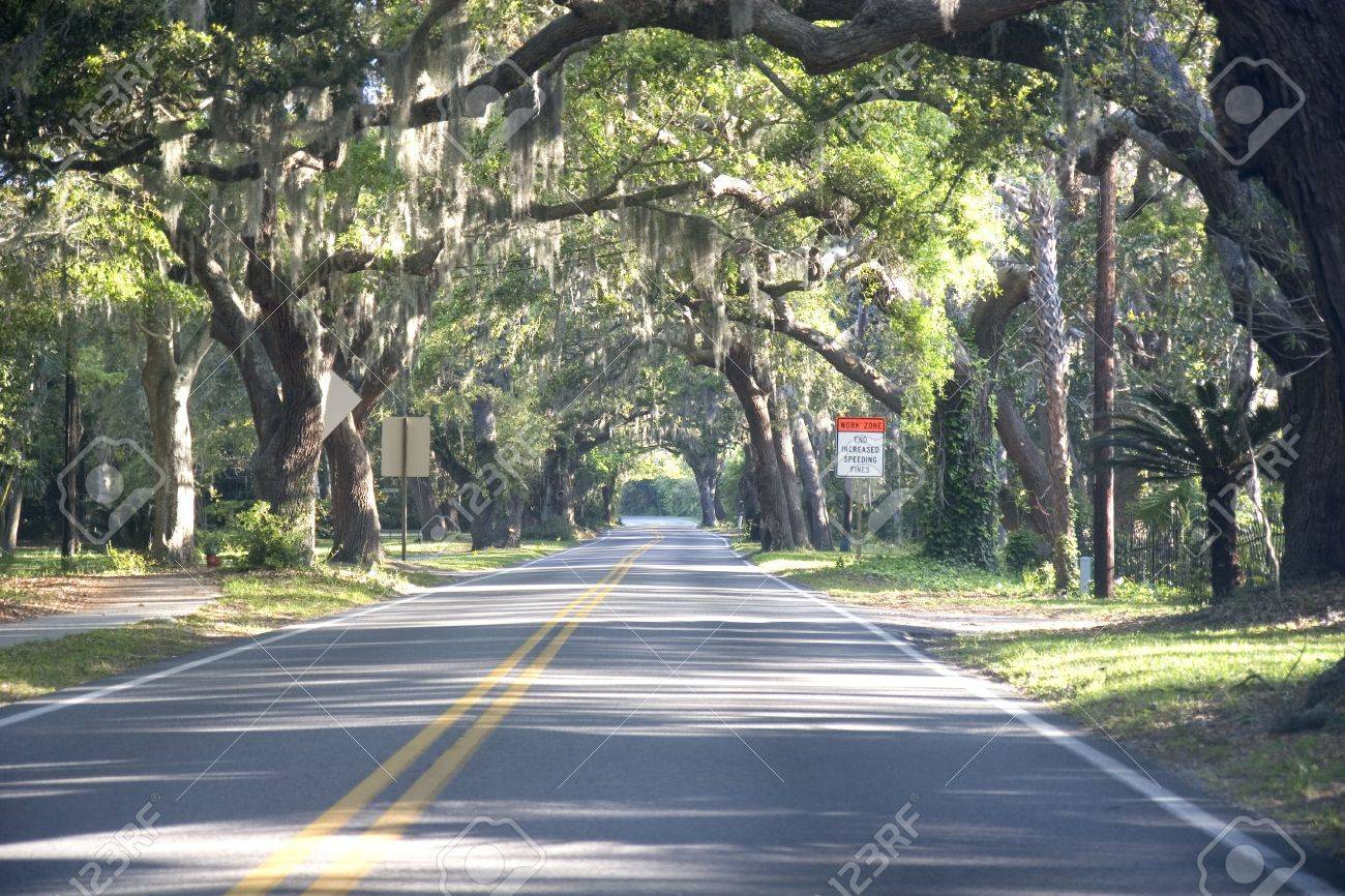 A Straight Road Through Old Southern Oak Trees Stock Photo ... for Straight Road With Trees  45ifm