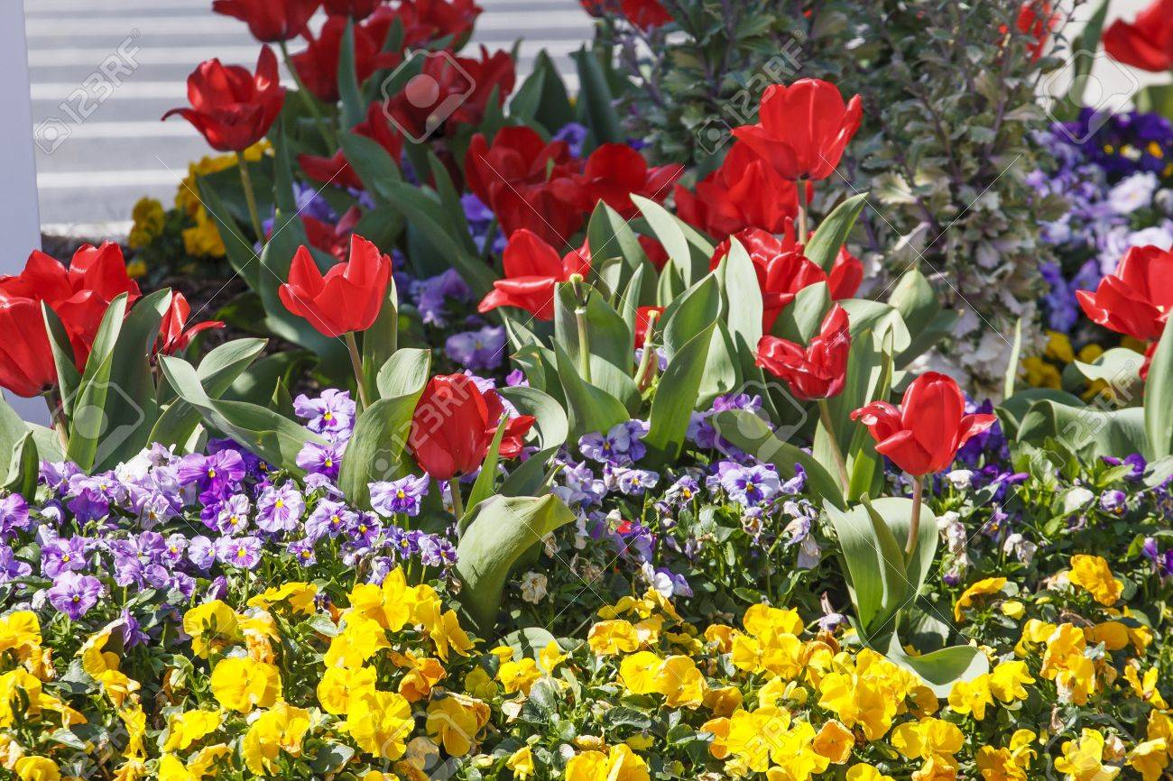 Red Purple And Yellow Flowers In A Fresh Spring Garden Stock Photo