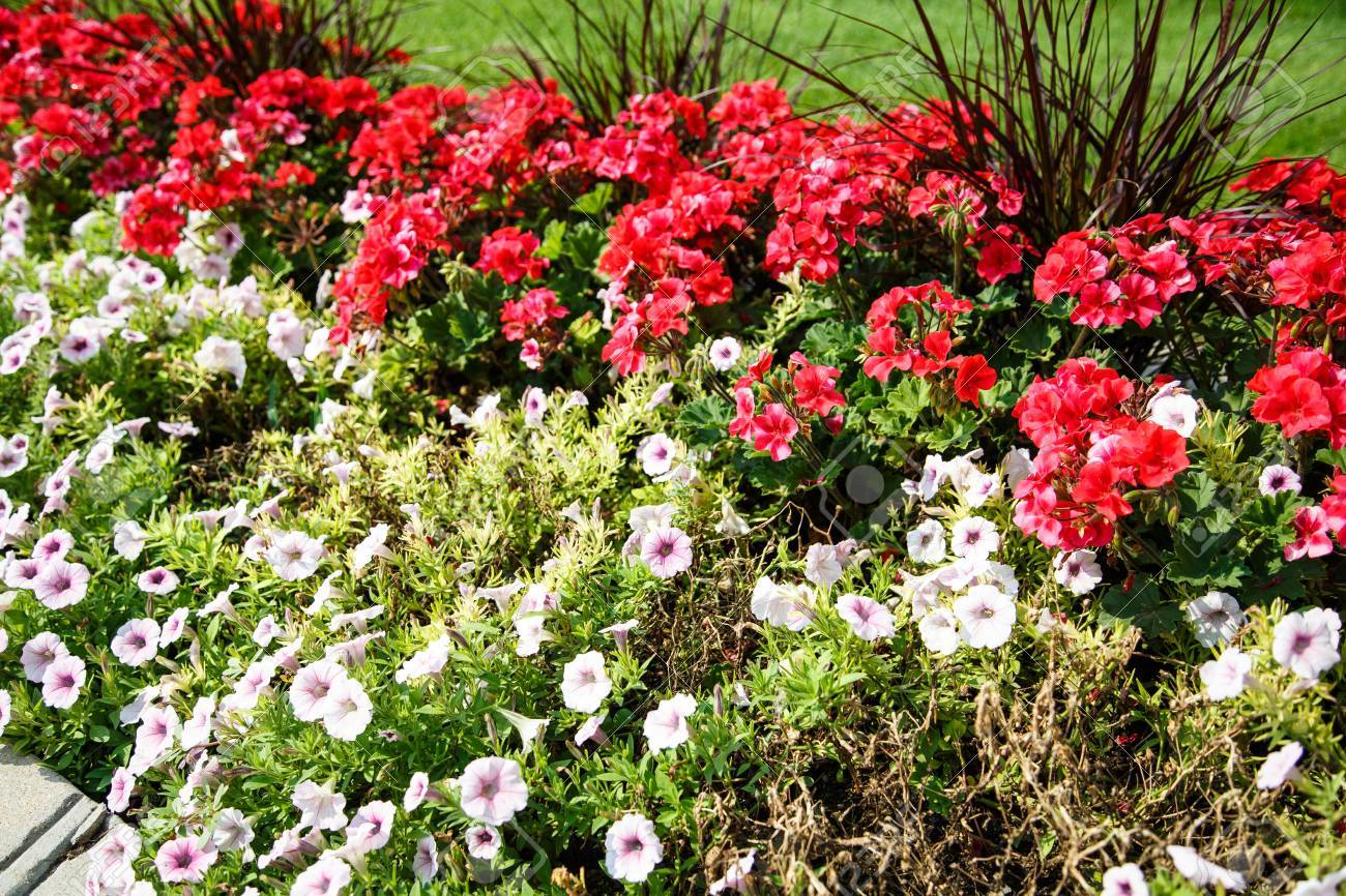 A Formally Landscaped Garden Of Red And White Flowers By Green