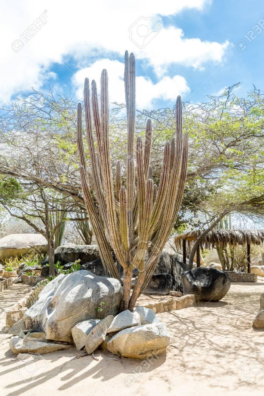 Desierto rido Y Seco Con Cactus Y Plantas Nativas Fotos Retratos