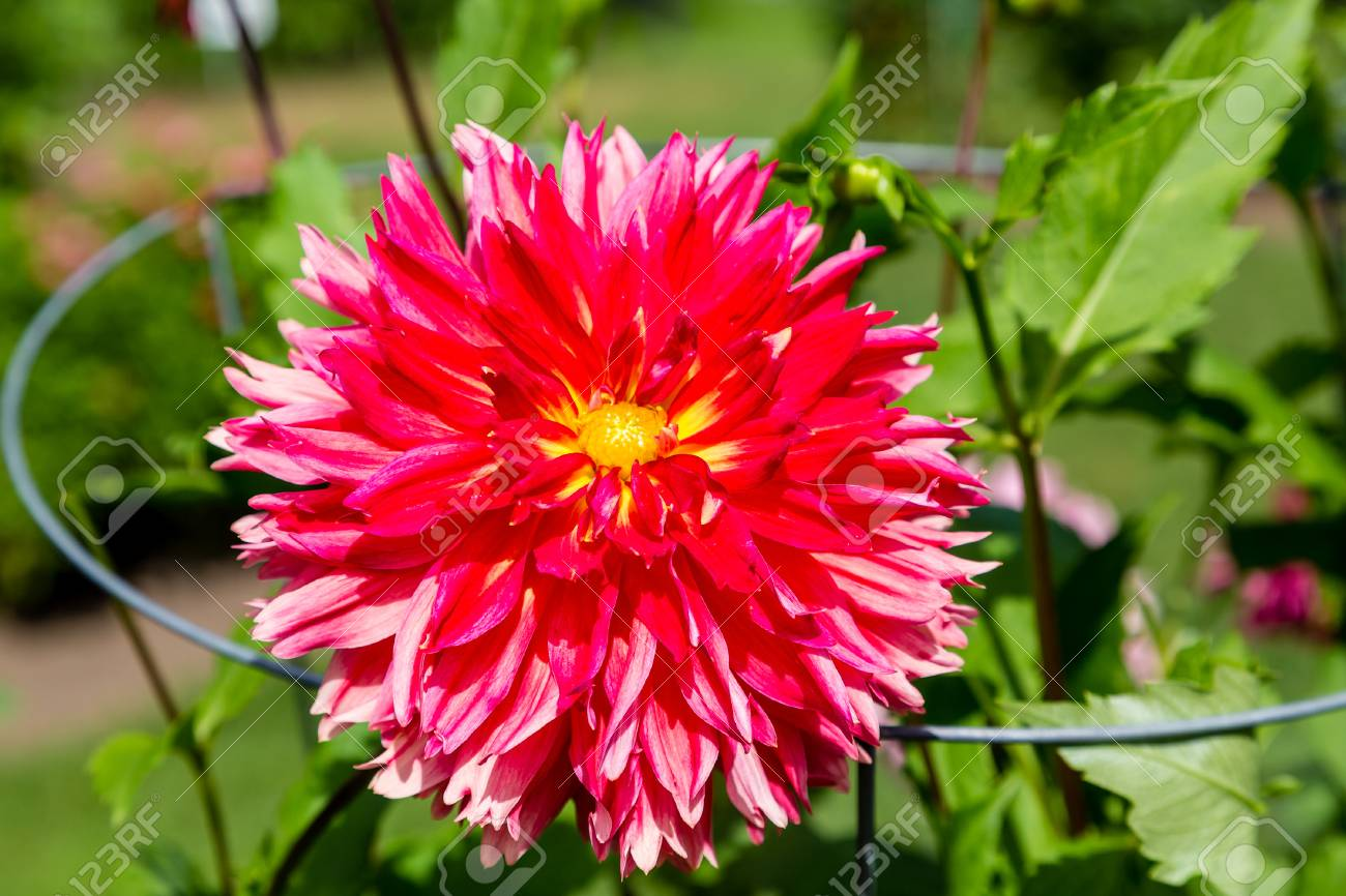 Beautiful flowers blooming in a sunny public garden stock photo beautiful flowers blooming in a sunny public garden stock photo 50189048 izmirmasajfo