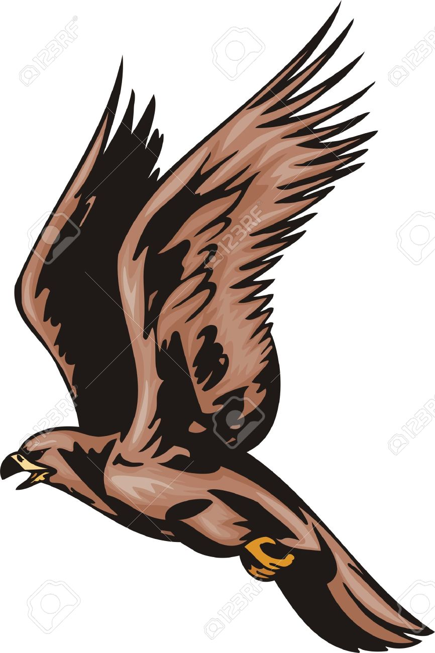 The falcon with brown plumage.Predatory birds. illustration - color b/w versions. - 8651945