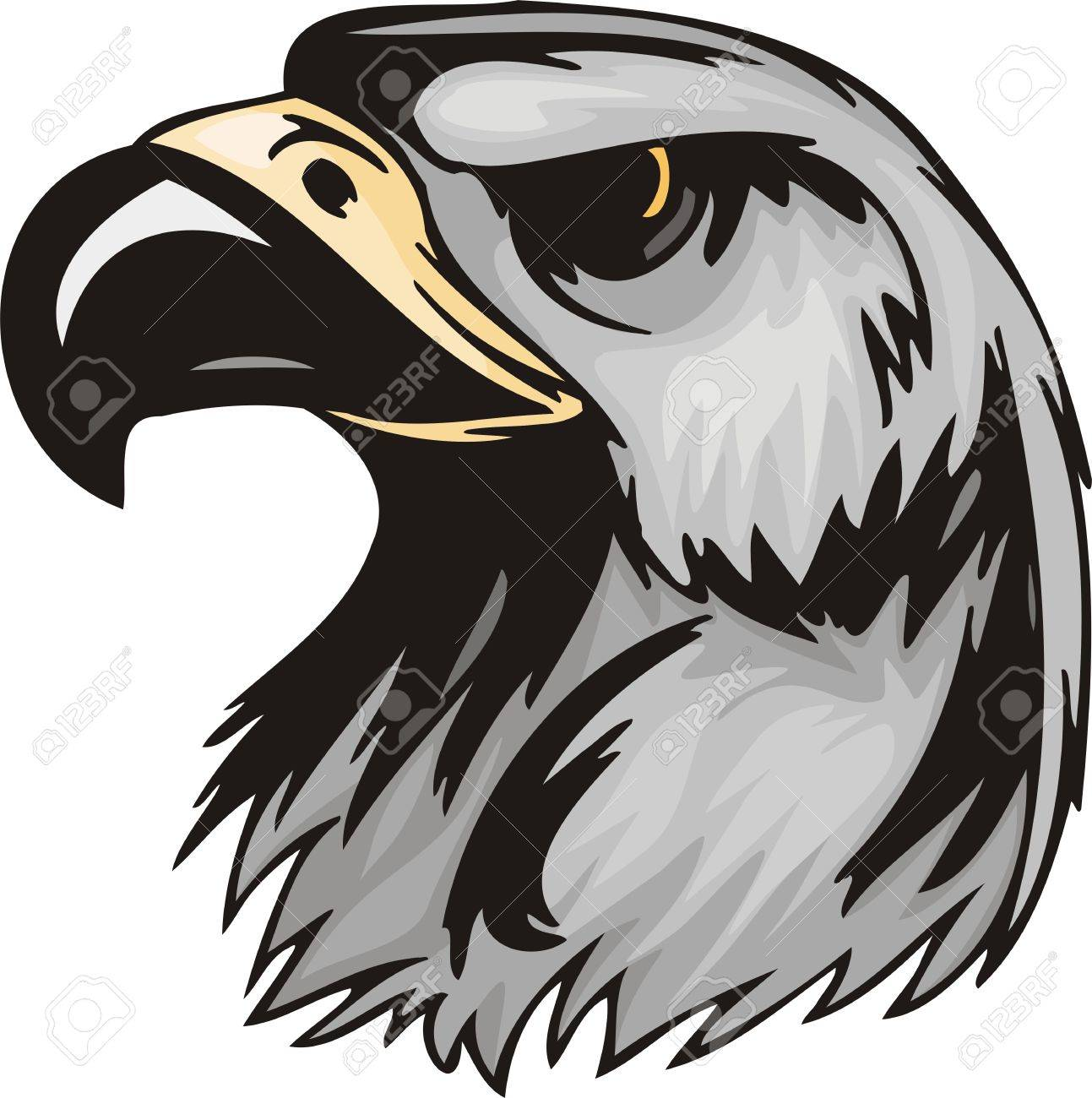 head of an eagle with the big sharp bill predatory birds