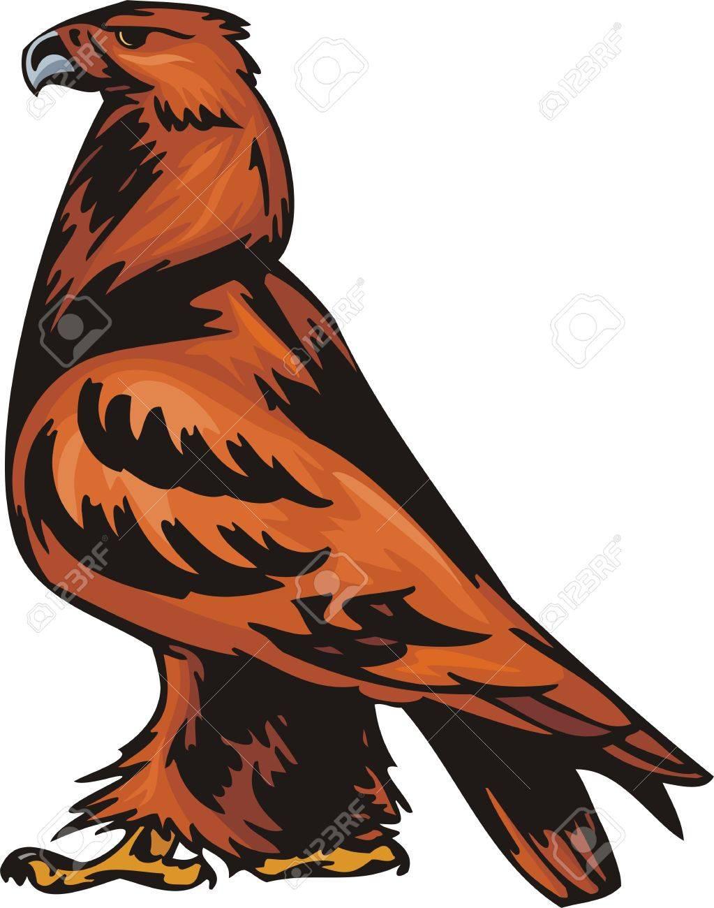 the big eagle with orange plumage predatory birds illustration