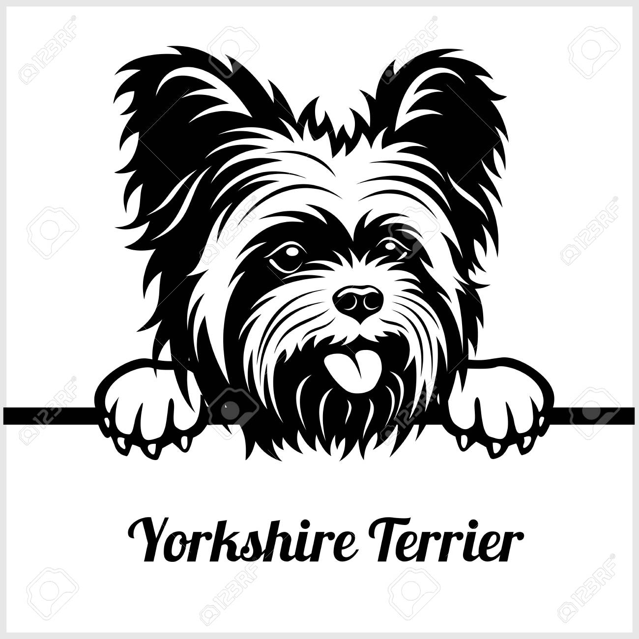 Yorkshire Terrier - Peeking Dogs - - breed face head isolated on white - 118845803