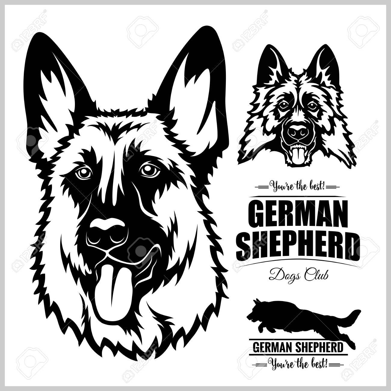 Shepherd Dog Portrait - vector illustration on white. - 135952056