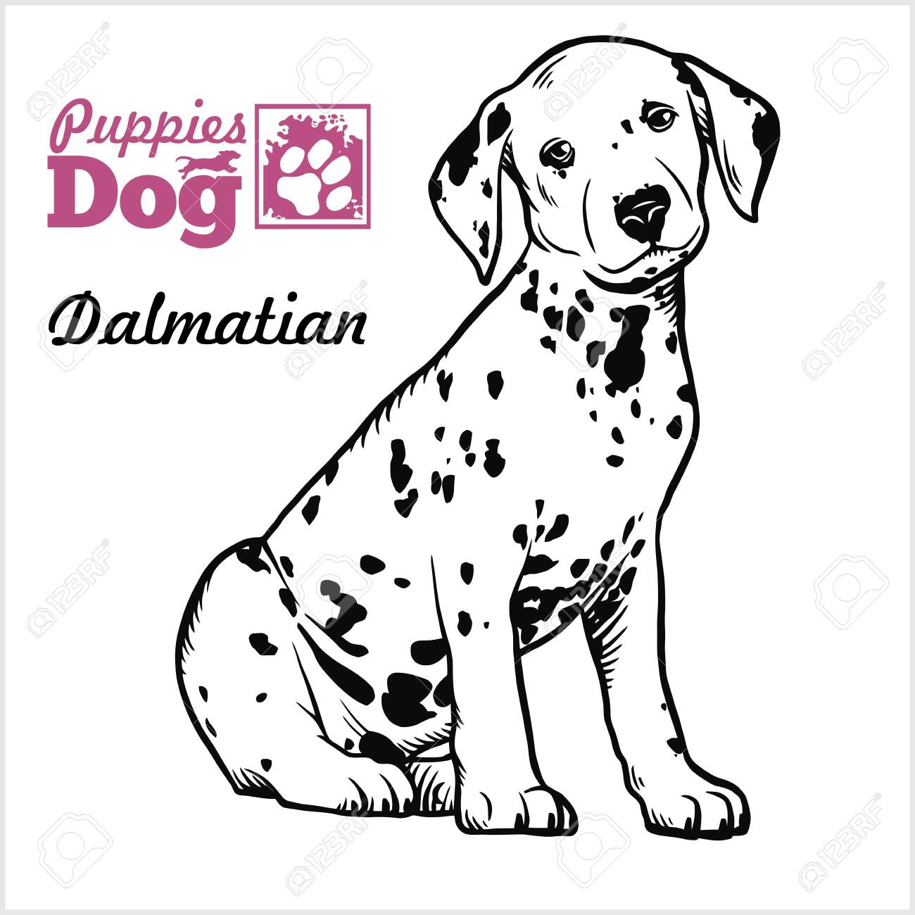 Dalmatian Puppy Sitting Drawing By Hand Sketch Engraving Style Royalty Free Cliparts Vectors And Stock Illustration Image 142050807