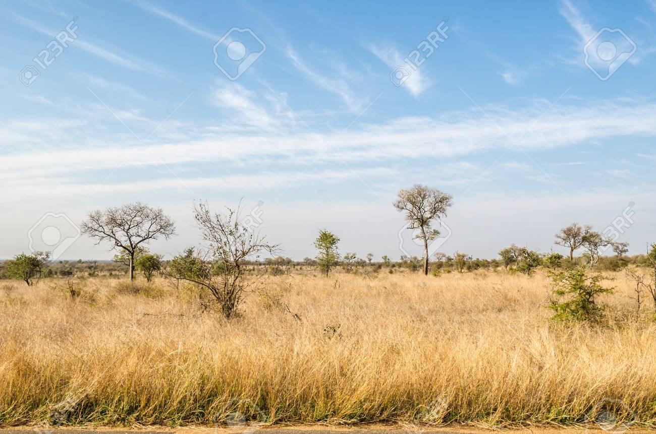 クルーガー国立公園は、サバンナ植生は黄色草です。南アフリカ の写真 ...