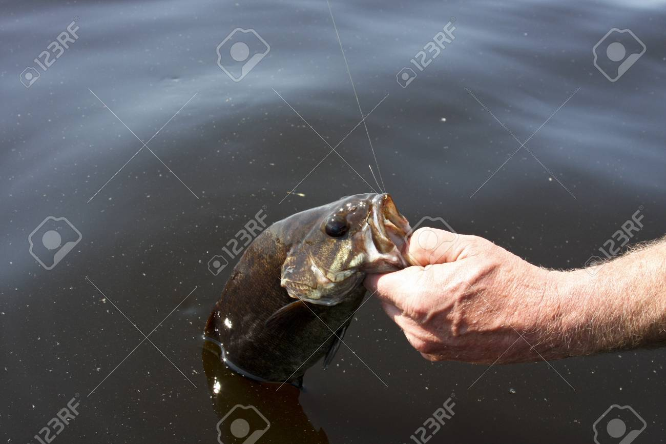 small mouth bass caught fishing a freshwater lake Stock Photo - 9835741