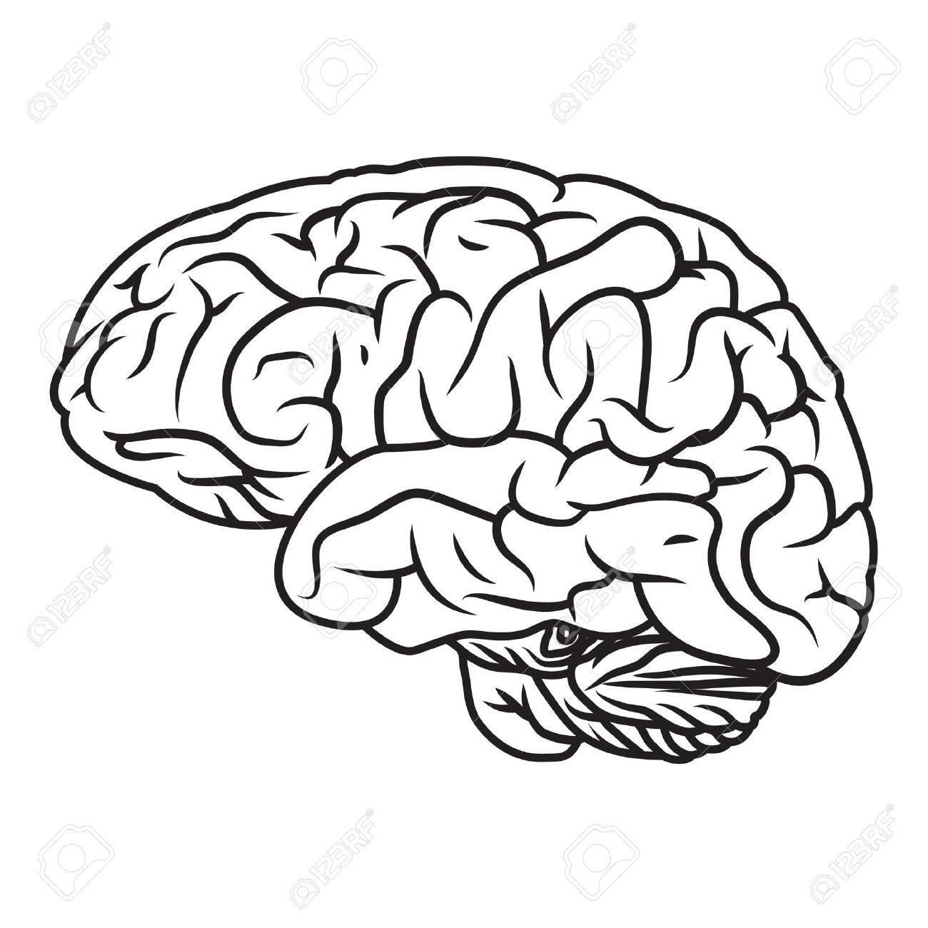 Wunderbar Malbuch Des Menschlichen Gehirns Bilder - Malvorlagen Von ...