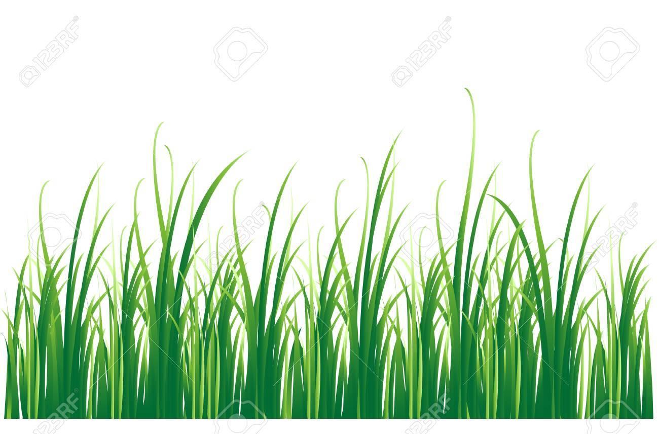 grass background Stock Vector - 8050522