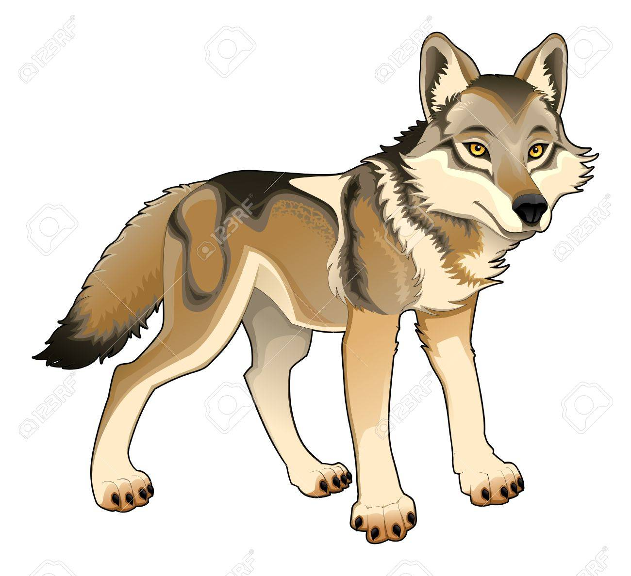 Wolf Stock Vector - 17475340