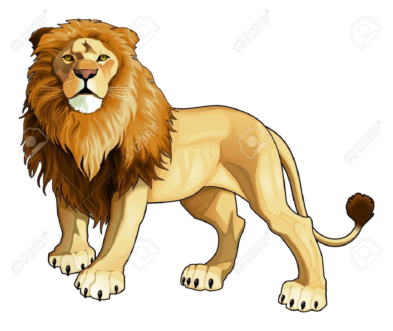 Lion king. Vector isolated animal. Stock Vector - 17542405