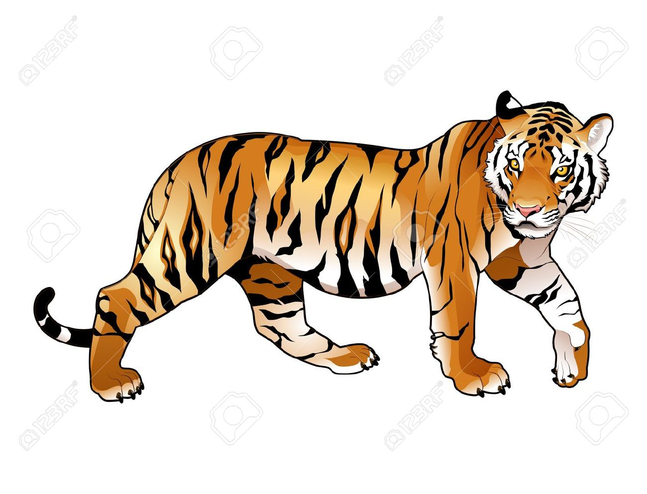 38 885 tiger stock vector illustration and royalty free tiger clipart rh 123rf com tiger clip art black and white tiger clipart pictures