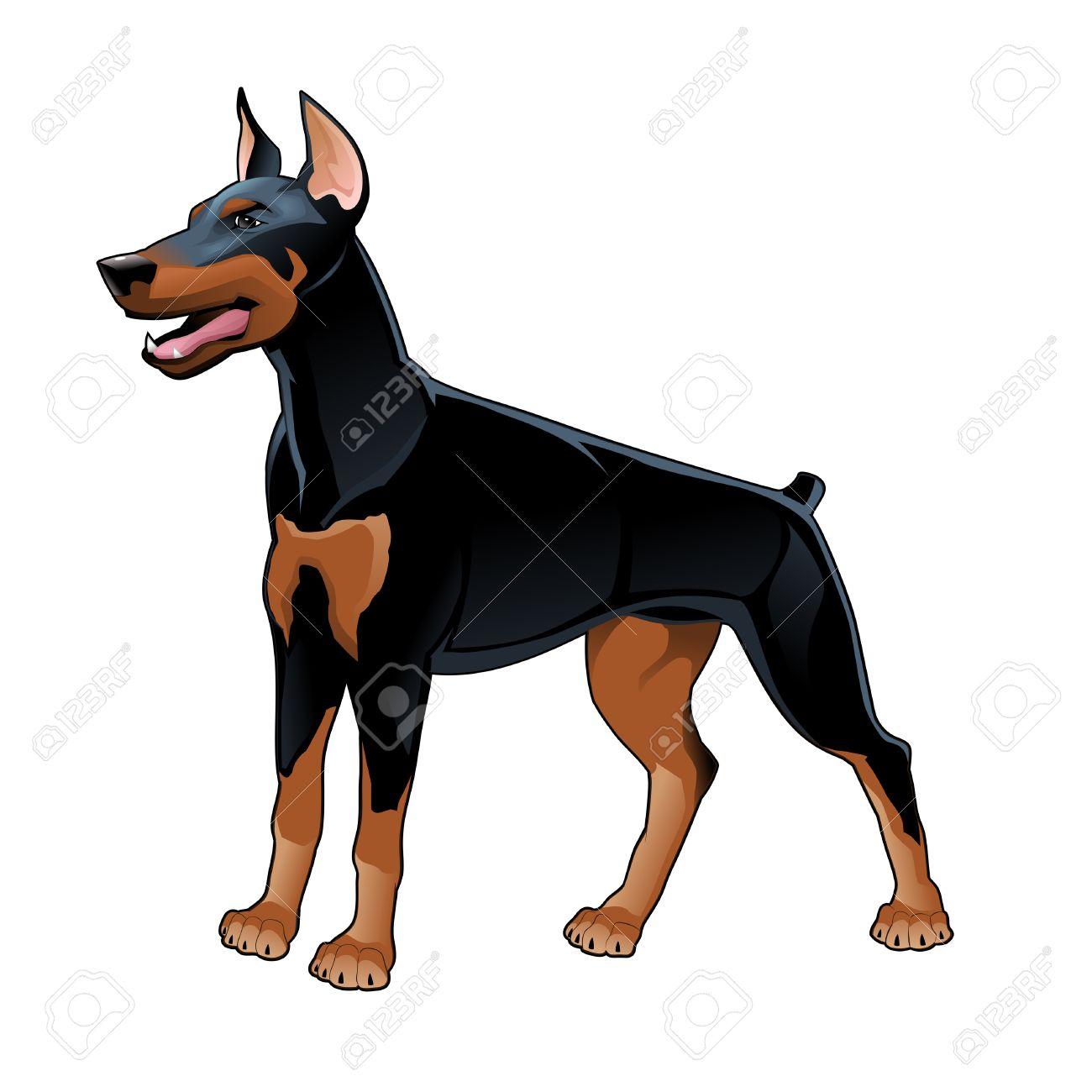 Dobermann Pinscher. Vector isolated dog. Stock Vector - 23237748