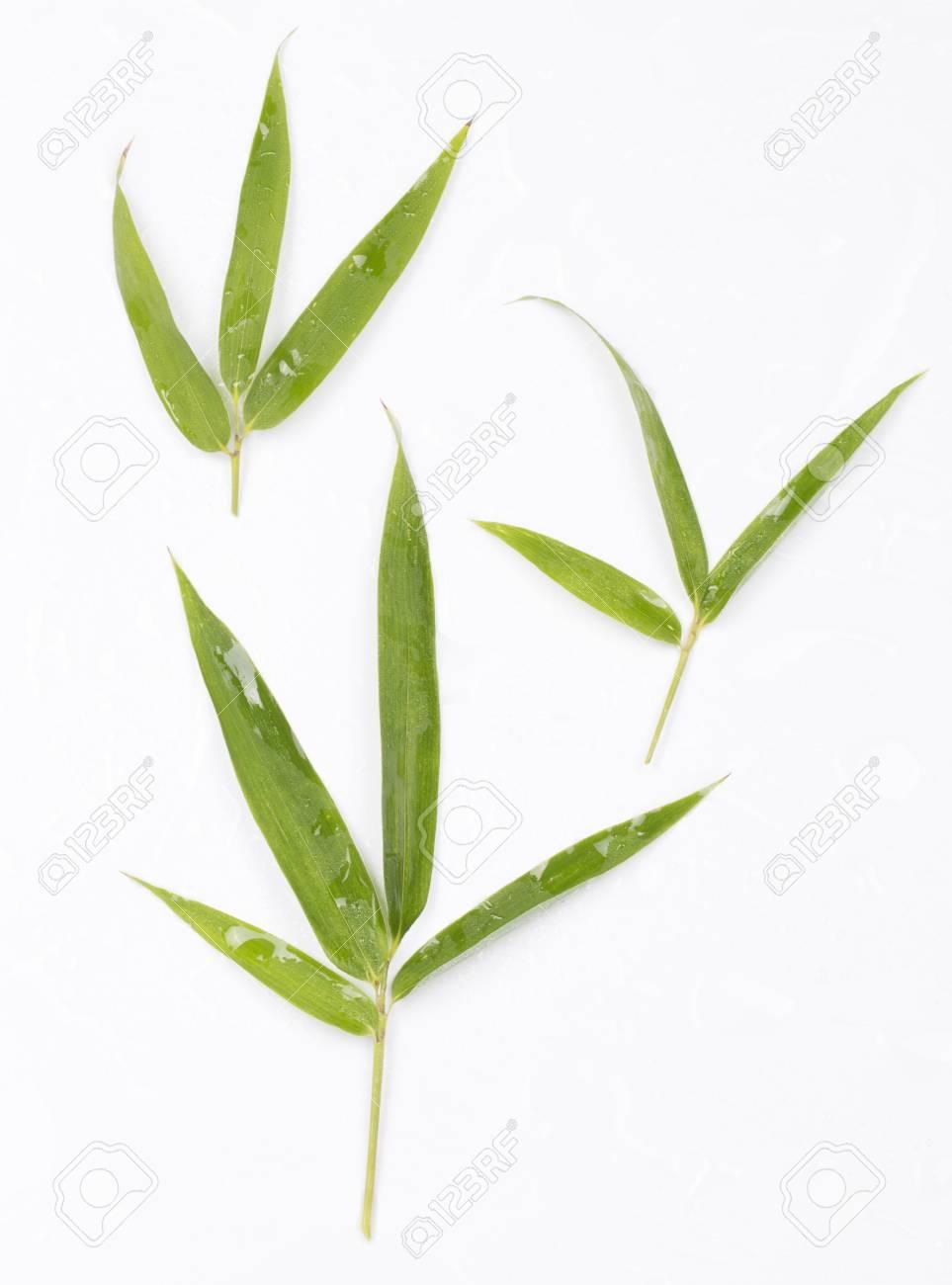 Foglia Di Bamb.Foglia Di Bambu Fresca Su Fondo Bianco