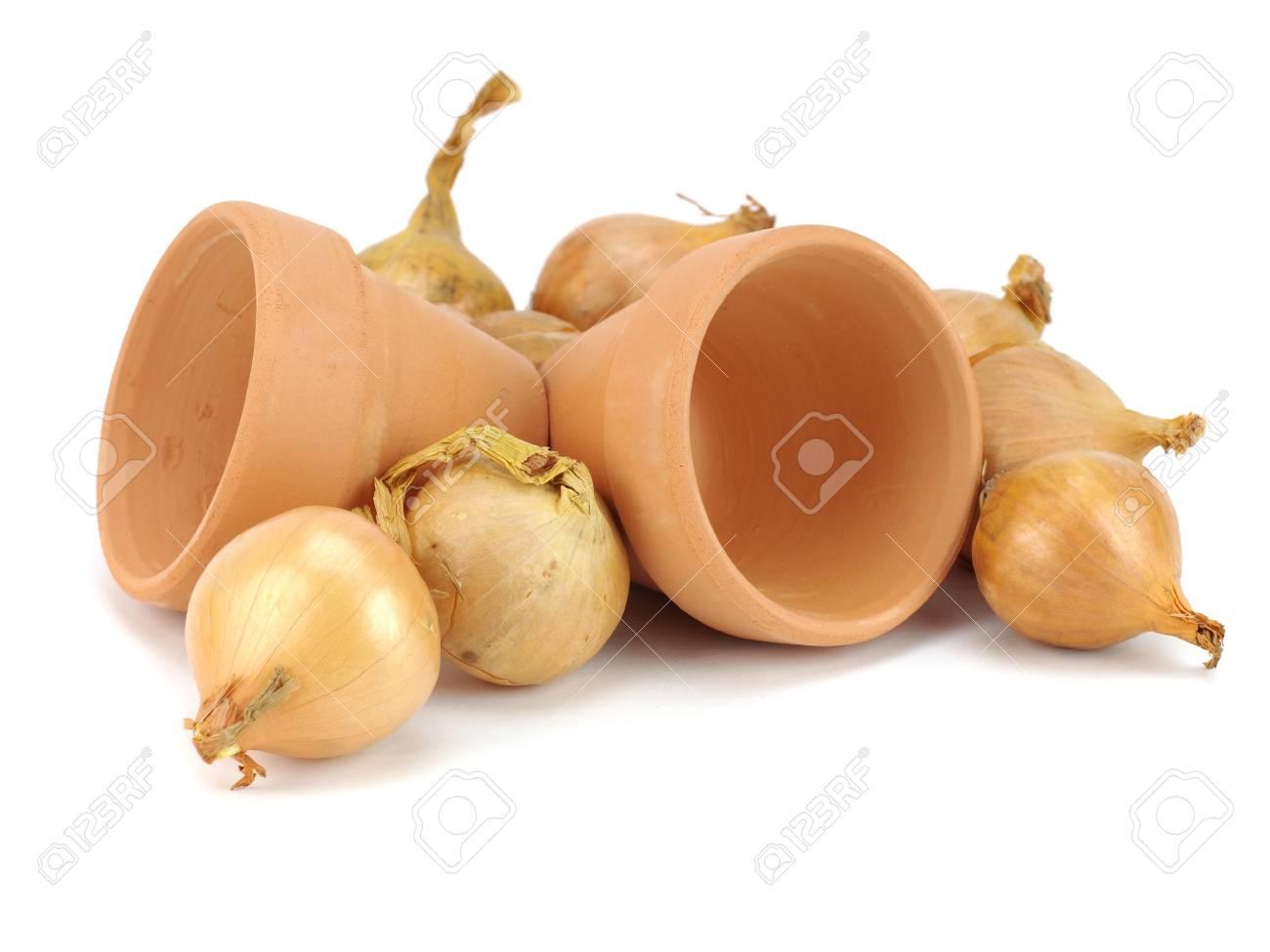 Oignon Blanc A Planter des semences d'oignons destinés à la plantation et l'argile des pots de  fleurs sur fond blanc